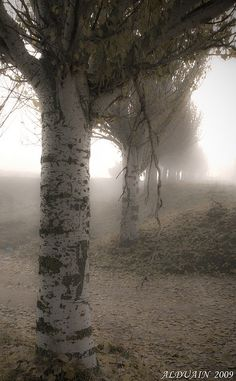 I have always loved walking into the fog and disappearing.