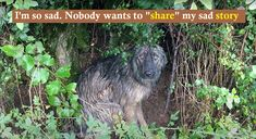 dogs: Dog Waited In The Pouring Rain For Her Family To C... Dog Rescue Shelters, Rescue Dogs, Warm Bed, Big Backyard, Dog Stories, Dog Runs, Feeling Great, Rain, Pets