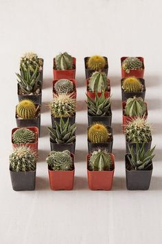 """2"""" Live Assorted Hardy Plant - Set of 20"""