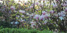 BÆR, BLOMSTRING OG HØSTFARVER - Garden trees