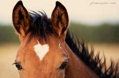 Heart Marking on horse