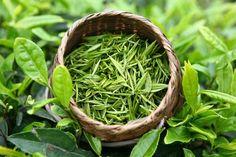 Green tea - china Herbal Tea Bags manufacturer - Shaanxi Sciphar Natural Products Co. Chinese Greens, Chinese Tea, Green Tea Plant, Rich Tea, Maitake Mushroom, Most Popular Drinks, Beautiful Soup, Green Tea Extract, Herbal Tea