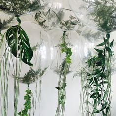 transparent balloons filled with green foliage as decoration transparente Luftballons mit grünem Lau Transparent Balloons, Clear Balloons, Gold Balloons, Wedding Balloons, Giant Balloons, Confetti Balloons, Birthday Balloons, Jungle Balloons, Baby Shower Balloons