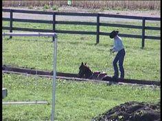 Clinton Anderson Outback Horsemanship