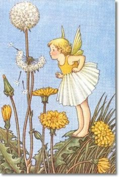 ida Rentoul Outhwaite: 'Dandelion Fairy'