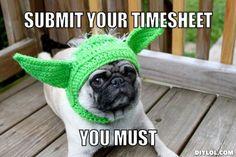 Timesheet Memes, Birthdays, Cat Memes