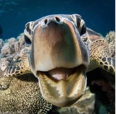 Master Class underwater photography tutorial by Scott Gietler - getting a great photo Turtle Love, Green Turtle, Reptiles, Land Turtles, Sea Turtles, Crocodile, Animals And Pets, Cute Animals, Turtle Swimming