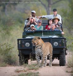 Safari Adventure Sabi Sands, Safari, Africa  One of the places left I really want to travel too