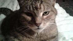LOST CAT: 11/06/2017 - Altamonte Springs, Florida, FL, United States. Ref#: L38204 - #CritterAlert #LostPet #LostCat #MissingCat
