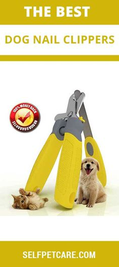 Our Experts Pick Up Top 10 Best Dog Nail Clippers in Make nail trimming a simpler process for you and your dog with this handy guide. Dog Nail Clippers, Dog Nails, Dog Care, Best Dogs, Your Dog, Pets, Tips