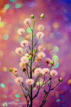 "blooms-and-shrooms: "" Just Like Magic by alexgphoto """