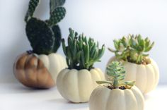 As Halloween is approaching I was looking for something new to do with pumpkins, and figured why not make them into planters like I do everything else! I wanted to keep my clean, so I left them all their natural white color, and just painted one of them with a gold color block design. So …