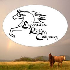 Guide to Vieques Puerto Rico Horseback Riding Tours
