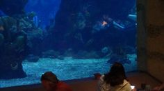 A meal at Coral Reef puts you face to face with the creatures of The Living Seas. If you'd like to dine right next to the aquarium, request a table by the tank when you make a reservation or at the check-in counter. Epcot Restaurants, Fresh Seafood, Disney Dining, Yummy Appetizers, Places To Eat, Seas, A Table, Counter, Aquarium