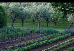 Un orto a lunghe file, basico e schematico, ricco e generoso, all'Argentario, Grosseto. Progetto di Paolo Pejrone