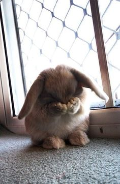 Funny pictures about Little Bunny Foo Foo. Oh, and cool pics about Little Bunny Foo Foo. Also, Little Bunny Foo Foo. Funny Bunnies, Cute Bunny, Bunny Bunny, Easter Bunny, Fluffy Bunny, Bunny Rabbits, Bunny Meme, Easter Eggs, Adorable Bunnies
