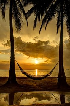 - Jamaican Sunset, sunbeams, palm trees, hængekøje, beach, clouds, beauty of Nature, Ocean view, panorama, photo