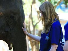 Une journée au Baan Chang Elephant Park de Chiang Mai