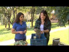 Como fazer seu composto orgânico | Vida & Saúde