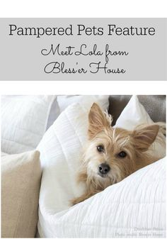 Lola from Bless'er House is one of our featured pampered pets. Read all about a day in the life of Lola.