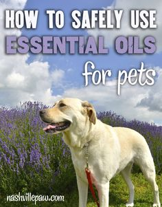 Aromatherapy for Pets: How to Safely Use Essential Oils | Blog | Nashville Paw