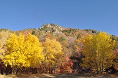 My Picture of the Day  Fall in Utah.  The Nebo Loop  No fees!  No crowds