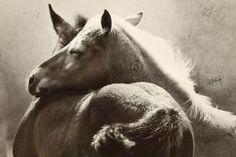 2 Wild Mustang Foals. by johanna