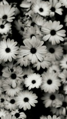 Pictures of black and white flowers google search pictures of pictures of black and white flowers google search pictures of flowers in black white pinterest white flowers wallpaper and illustrations mightylinksfo
