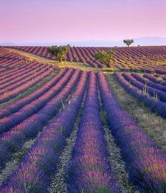 En Provence!
