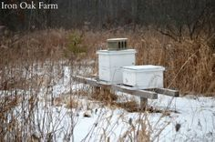 What Do Bees Do All Winter? - How to prepare your backyard bees for winter