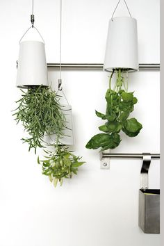 Inverted Herb Garden that uses an internal reservoir system to feed water directly to the roots, so no water evaporates or drips. The soil is locked in so there's no mess. Self-watering and only requires refill once or twice a month. Im sold.
