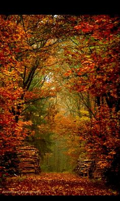 SEASONAL – AUTUMN – a scenic pathway surrounded by the brilliant colors of fall. Beautiful World, Beautiful Places, Beautiful Flowers, Autumn Scenes, All Nature, Fall Pictures, Belle Photo, Beautiful Landscapes, The Great Outdoors