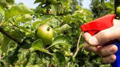 10 domácich postrekov: Nenechajte vošky zvíťaziť! - Pluska.sk Apple, Food, Meal, Eten, Meals, Apples