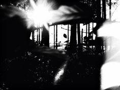 #art #photography #light #shadow #forest #fall #trees #sun #beauty #artleanda  Artleanda.com