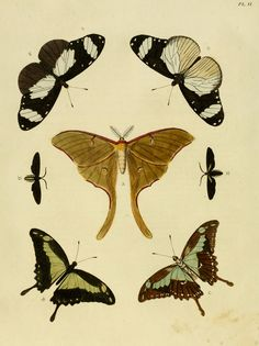 Borboletas - Butterflies, por Pieter Cramer