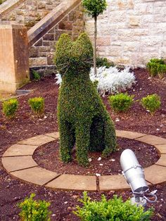 Belfast Castle and its 9 cats. Topiary Sculpture of a Sitting Cat, The green art of gardening created this sitting cat out of a bush ....