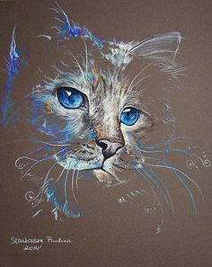 Magic CAT pastel,feline,cats**ORIGINAL CAT Painting 10