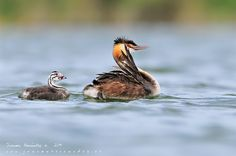 Family secrets... by Juanma Hernández on 500px