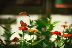 Animal, Flores Y Mariposas, Belleza