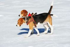 Snow pair of friends
