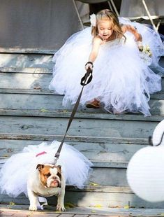 Funny Wedding Photos - Some couples want to include pets in their wedding day. Here you find wonderful photo ideas with wedding pets, ideas how to include dog to your wedding. Dog Wedding Outfits, Dog Wedding Attire, Wedding Dresses, Wedding Skirt, Wedding Dogs, Wedding Album, Cute Puppies, Cute Dogs, Cute Baby Animals