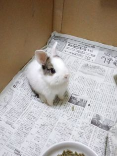 Images and videos of pet bunny Cute Funny Animals, Cute Baby Animals, Animals And Pets, Dwarf Bunnies, Bunny Care, Cute Baby Bunnies, Kawaii, Hamsters, Guinea Pigs
