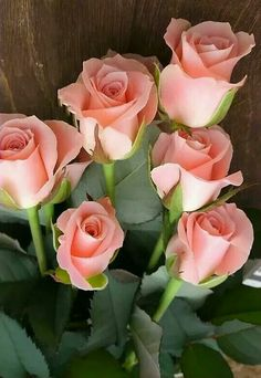 Pink roses - My site Beautiful Rose Flowers, Love Rose, Flowers Nature, Exotic Flowers, My Flower, Beautiful Gardens, Flower Art, Beautiful Flowers, Good Morning Flowers