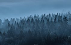"""Misty Morning - Image was taken in Aulanko national urban park, Hämeenlinna Finland   If you want to see more my work,<p><a href=""""www.facebook.com/laurilohiphoto"""">Follow me on my Facebook page</a></p>"""
