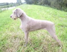 Gallery - Slovakian Rough Haired Pointer Club (Provisional)