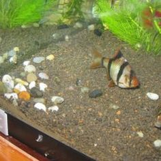 how to cure fish disease with aquarium salt