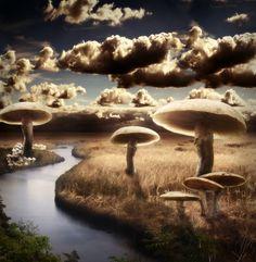 Mushroom Valley by Jas0nCola on DeviantArt