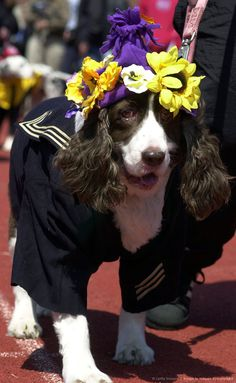 Ocean City Woofin Paws Easter Pet Parade And Fashion Show.