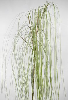 """Weeping Willow Branches Artificial 36"""" tall $7 each / 3 for $6 each"""