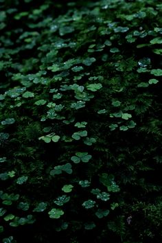 Explore amazing art and photography and share your own visual inspiration! Dark Green Aesthetic, Aesthetic Colors, Aesthetic Photo, Aesthetic Pictures, Slytherin Aesthetic, Green Photo, Hogwarts Houses, The Villain, Picture Wall